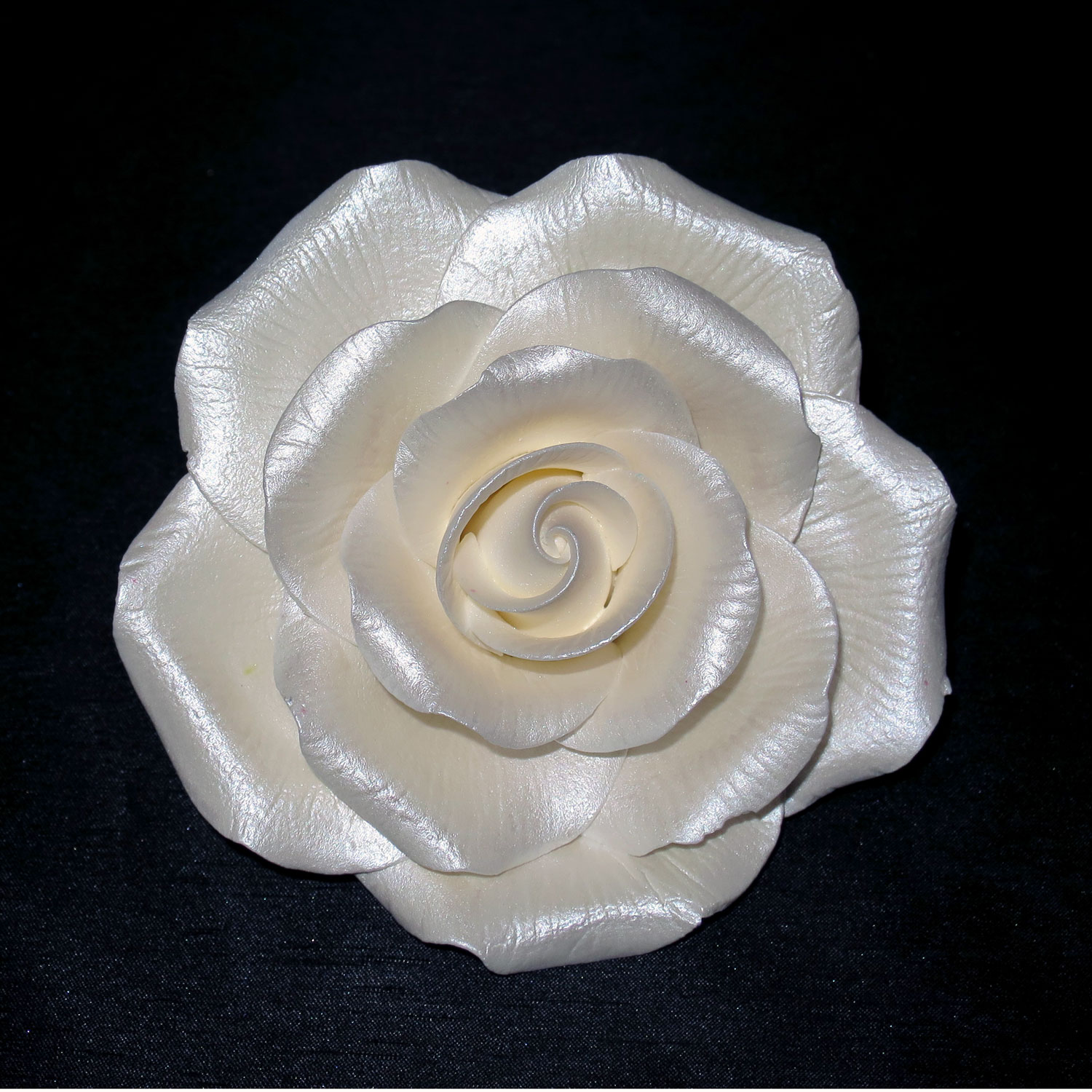 Giant Pearl White Peace Rose