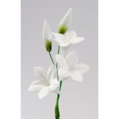 Jasmine jasmine sugar flowers sugar jasmine flowers mightylinksfo