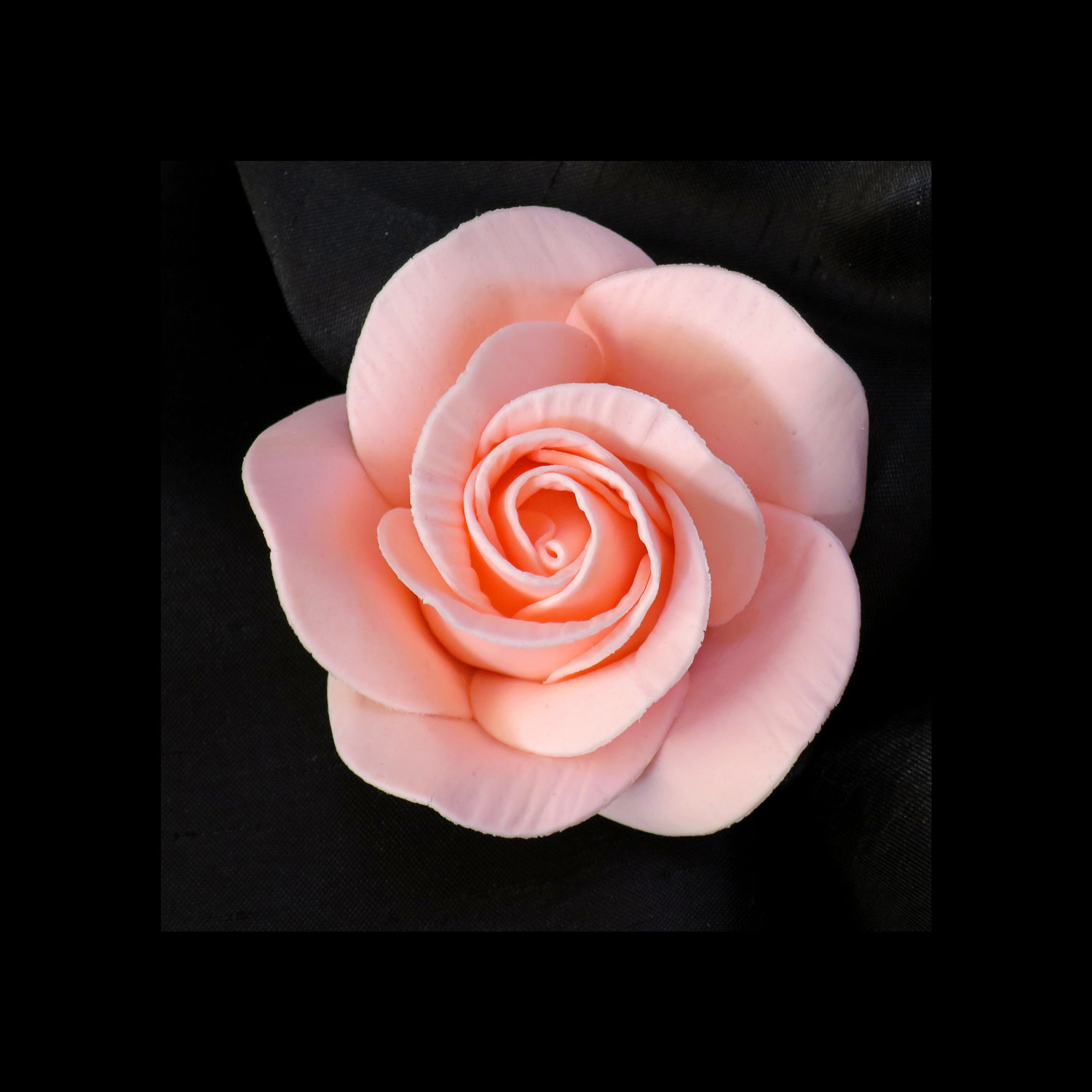 Pale Coral Sugar Rose